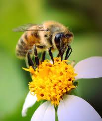 bi med blomma